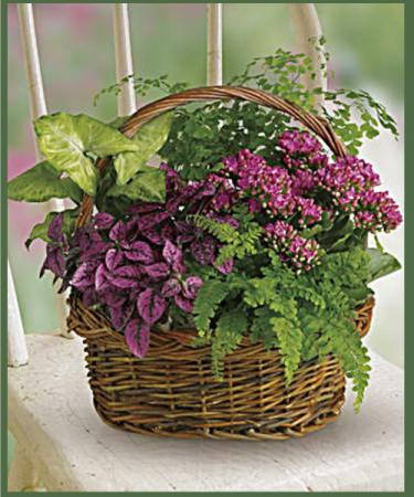 Secret Garden Plant Basket Potted Plants