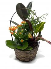 Secret Garden planter basket
