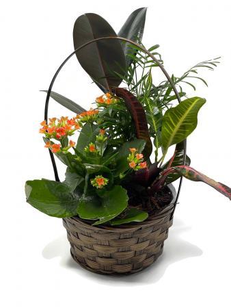 Secret Garden planter basket