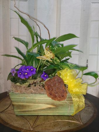 Mother's Secret Garden Wooden box planter