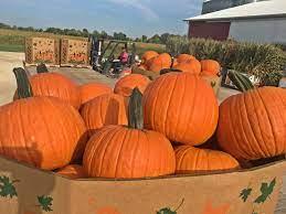 Send Your Pumpkin A Pumpkin