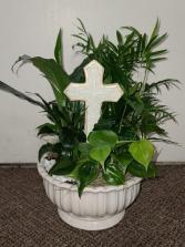 Sending Blessings Dish Garden  FHF-123 Assorted Plants