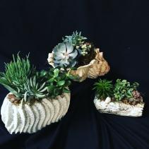 Sensational Succulent Garden Succulents