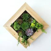 Succulent Hanging Wall Planter SUCCULENT PLANTER