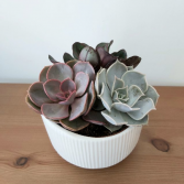 Sensational Succulent Planter 6