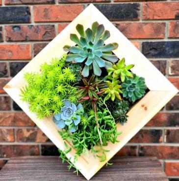 Sensational Succulents succulent planter
