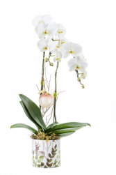 Serendipity Blooming Orchid Planter