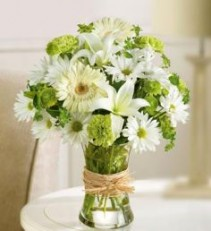 Serene Gree Bouquet Gerbera Daisies & Asiatic Lilies