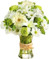 SERENE GREEN ARRANGEMENT