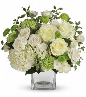 Serene Green Best Seller!  in Sunrise, FL | FLORIST24HRS.COM