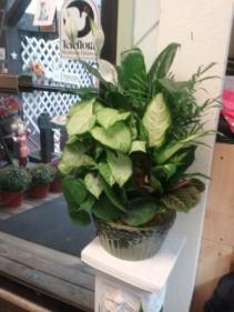 Serene green Dishgarden