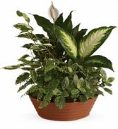 Serene Planter
