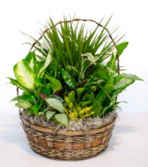Serene Retreat In A Basket Plant Arrangement