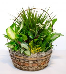 Serene Retreat In A Basket Plant Arrangement in Lexington, NC | RAE'S NORTH POINT FLORIST INC.