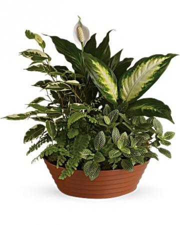 Serene Retreat Indoor Plants