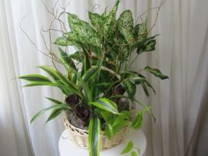 Serenity Garden Plant Basket in Woodbridge, ON | PRIMAVERA FLOWERS & MORE
