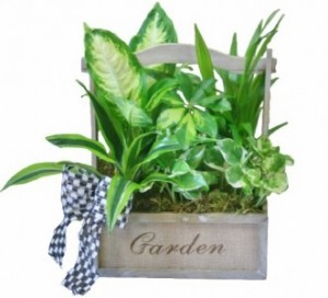 SERENITY GARDEN  Planter Basket in Riverside, CA | Willow Branch Florist of Riverside