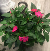 "Shade Loving 11"" Hanging Basket"