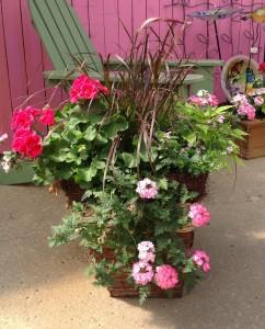 Shades Of Pink Begonia Garden Container Garden In Mansfield Oh