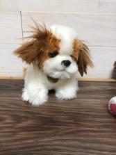 """ShihTzu puppy 8"""" plush"""