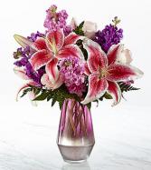 Shimmer & Shine Stagazer lily