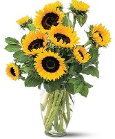 Shining Sunflowers Fresh Arrangement