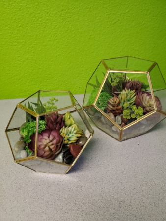 Silk Plant Succulents in Glass Orbs Gift