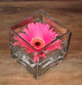 Simple but Elegant Gerbra Daisy Centerpiece