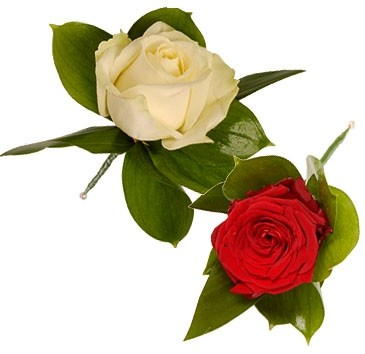 SIMPLE RED ROSE OR WHITE ROSE