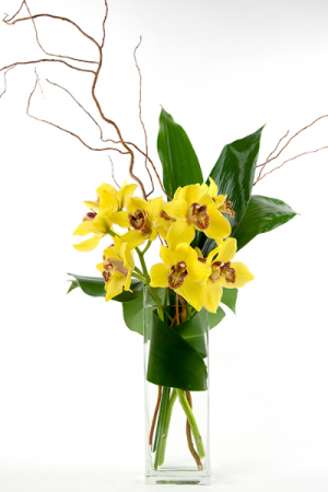 SIMPLE smile CYMBIDIUM  One side