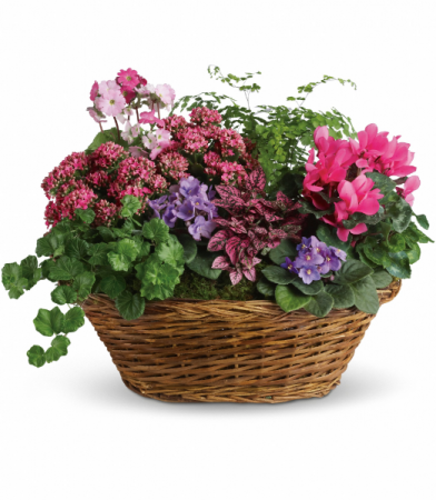 Simply Chic Mixed Plant Basket All-around