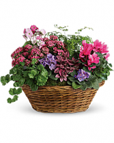 Simply Chic Mixed Plant Basket  Mixed Blooming Plants