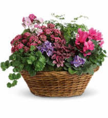 Simply Chic Mixed Plant Basket plant