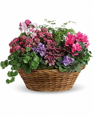Simply Chic Mixed Plant Basket T97-1