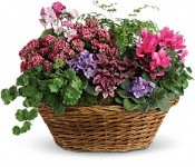 Simply Chic Mixed Plant Basket  in Burbank, CA | LA BELLA FLOWER & GIFT SHOP