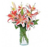 Simply Lilies Vased Arrangement