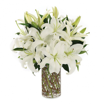 Simply Lily-White