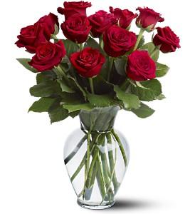 ON SALE! 1 Dozen Any Color Rose