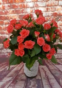 SIMPLY SPRAY ROSES