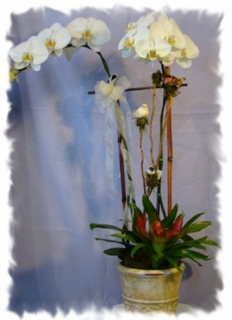 SIMPLY WHITE ORCHID PLANT