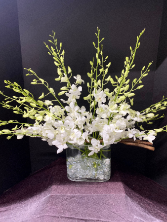 Simply White Orchids