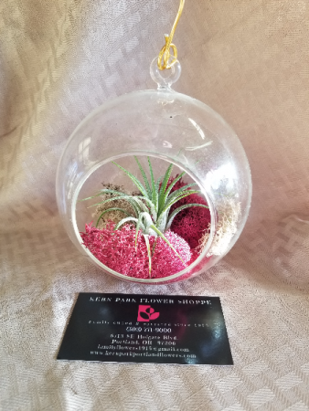Single Air Plant  Hanging Orb