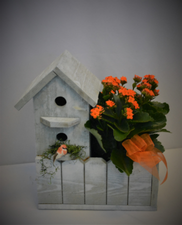 SINGLE BIRD HOUSE PLANTER -LIMITED QTY BLOOMING PLANT