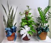 Single Green Plants Green Plants