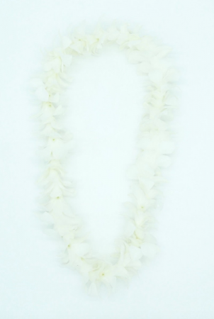 SINGLE LEI - WHITE Fresh Orchids
