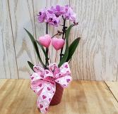 Single Mini Orchid Plant Plant