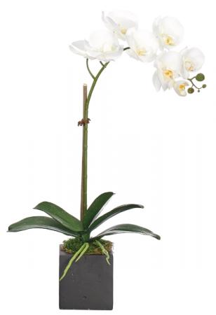 Single orchid in black or white ceramic