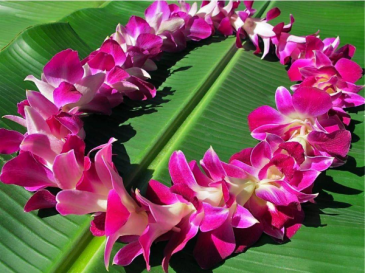 Single orchid lei