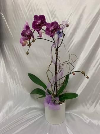 Single Orchid Orchid Arrangement