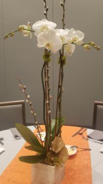 Single Orchid Plant Plant